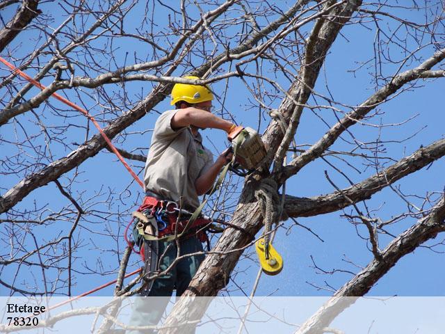 abattage arbre levis