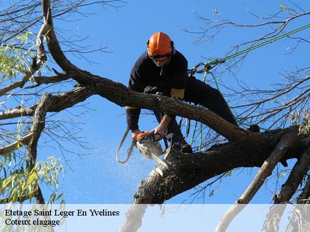 elagage arbre yvelines