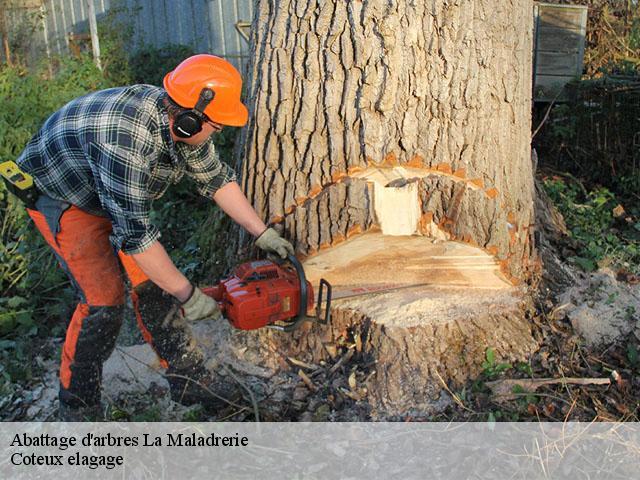 abattage arbre 24